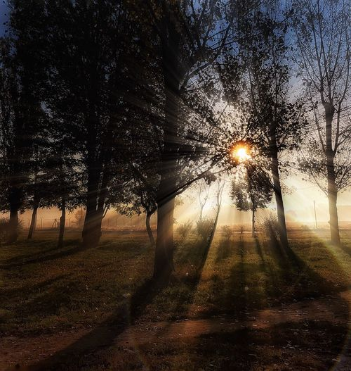Tree Nature Sun No People Outdoors Beauty In Nature Tranquility Sunlight Branch Illuminated Day Sky