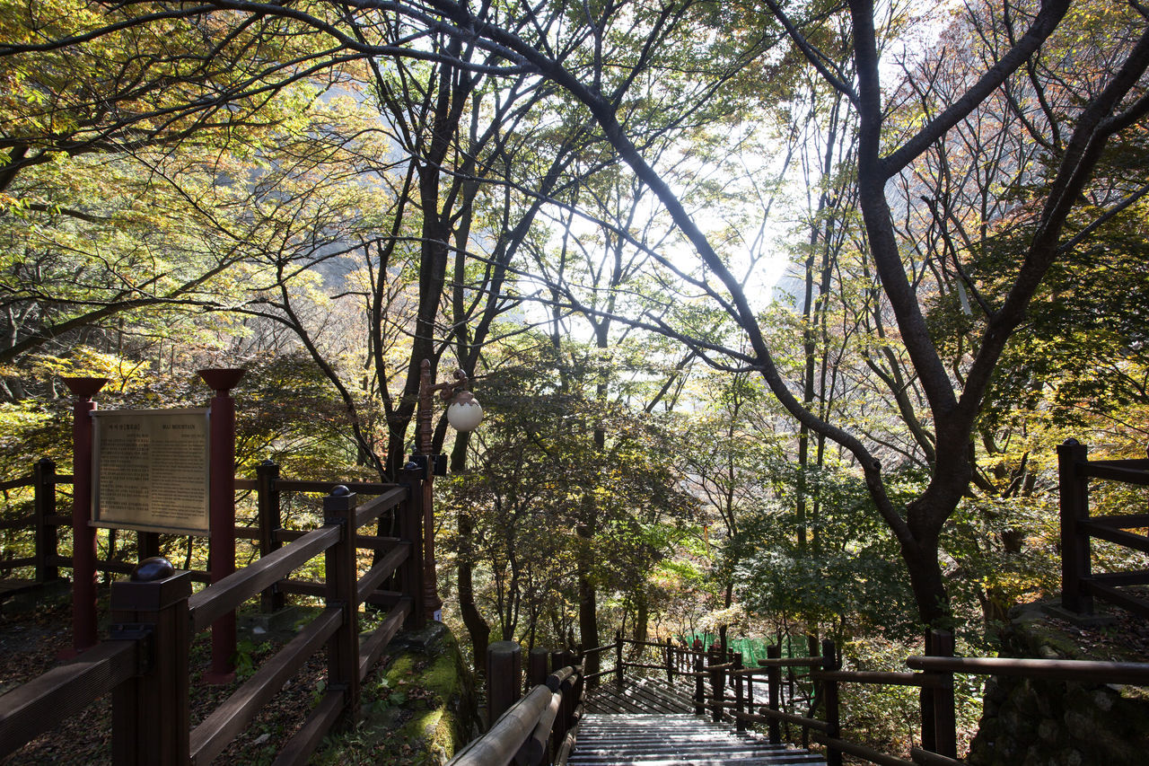 autumn in Maisan Mountain, Jeonbuk, South Korea Architecture Autumn Autumn Colors Beauty In Nature Branch Day Fashion Growth Maisan Nature No People Outdoors Railing Tree