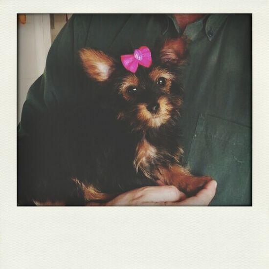 Dog Baby Love Missing