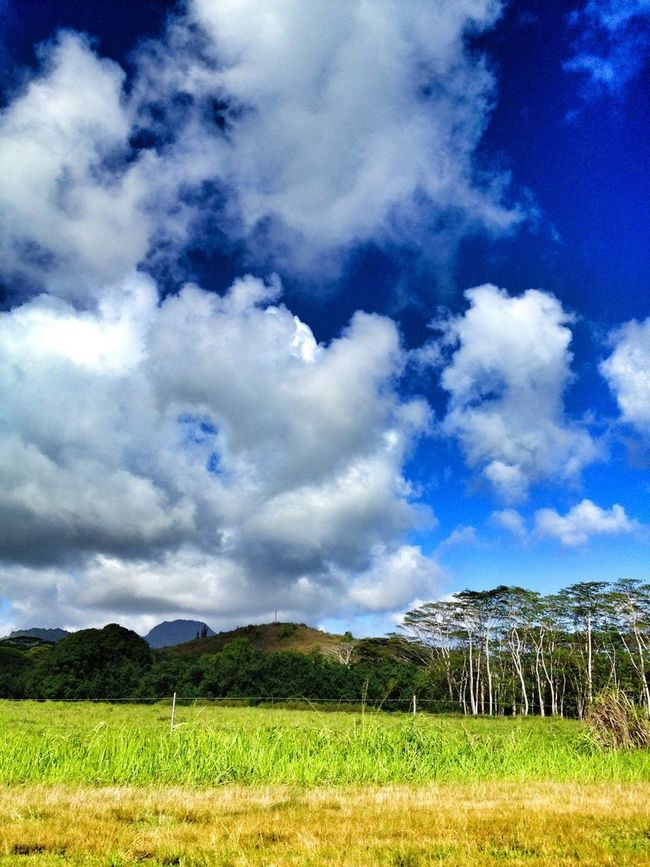 I love this state. Green Clouds And Sky Hawaii Kauai