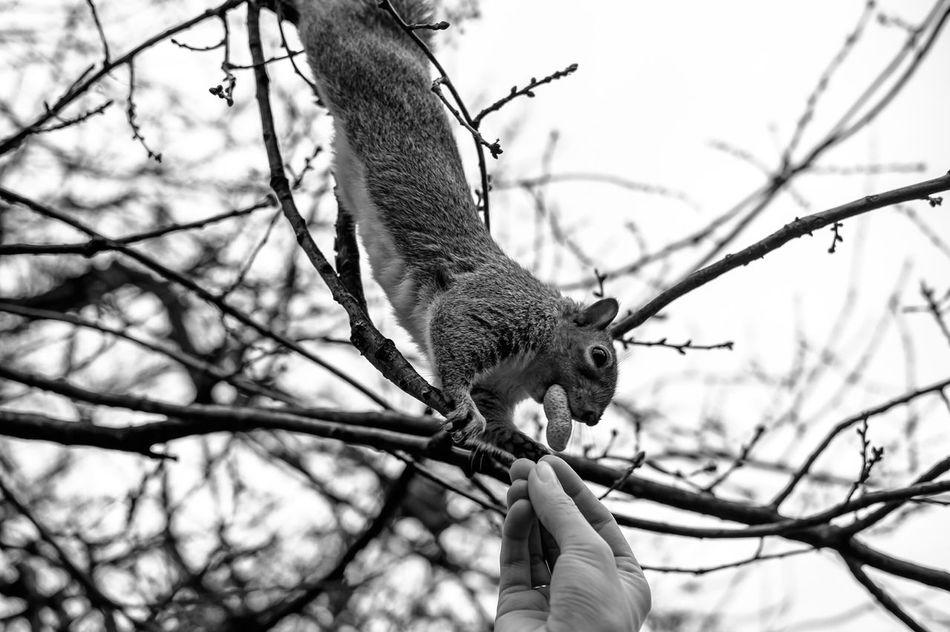 Beautiful stock photos of eichhörnchen, Animal Themes, Animal Wildlife, Animals In The Wild, Bare Tree