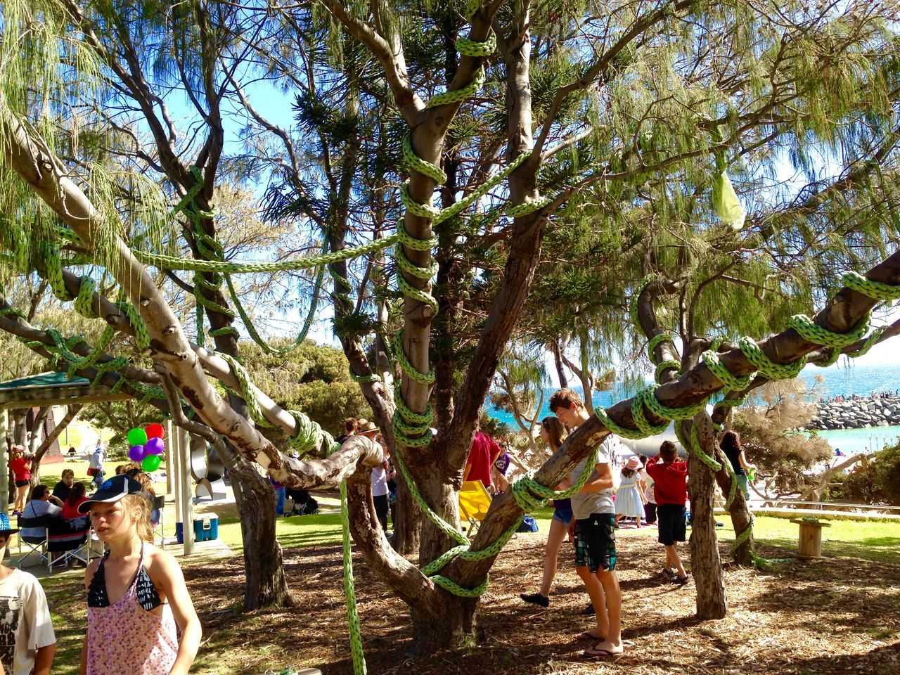 Woven Tree- Sculpture by the Sea, Cottesloe Beach-circa March 2014 Tree Woven Western Australia Weekend Activities Vacations Sculptures By The Sea Recreational Pursuit Sculpture Perth Outdoors Incidental People Expressive Sculpture Cottesloe Beach Enjoyment Art Event Art Abstract Knit Draped Tree Woven Around Tree