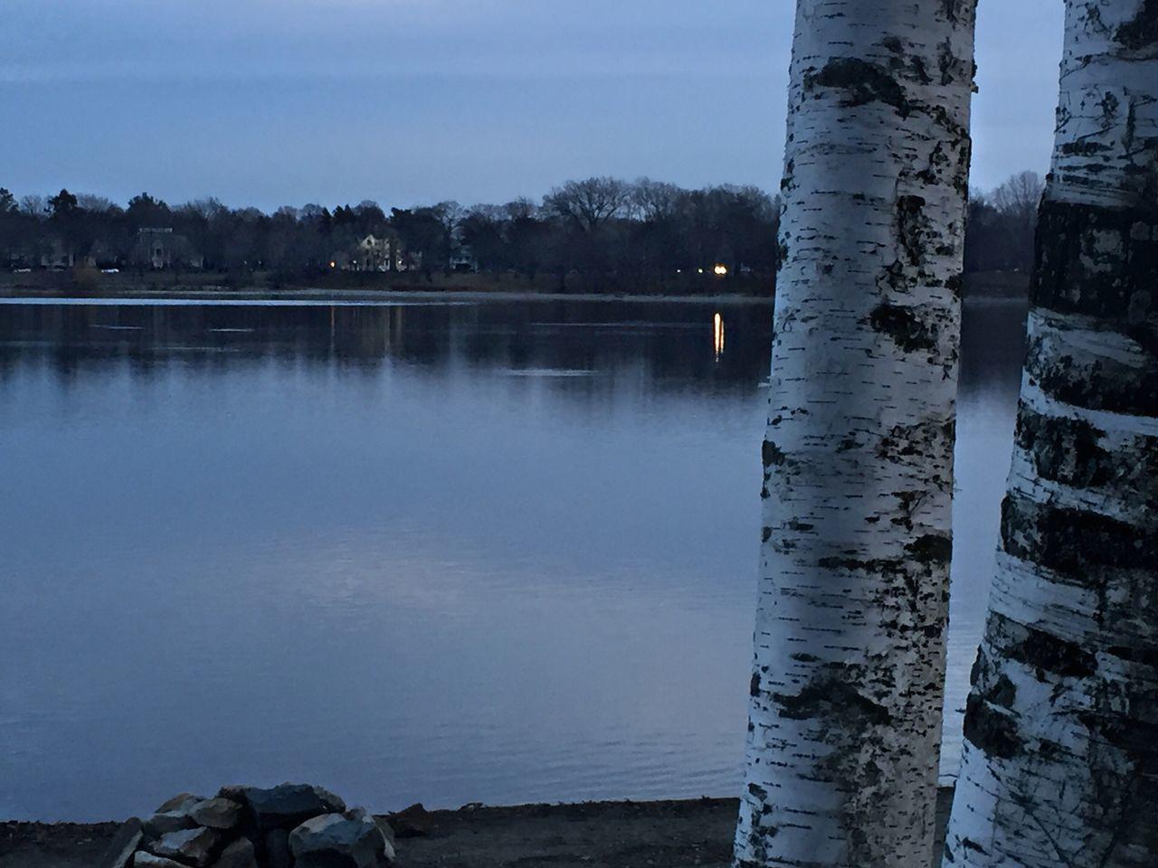 Birch tree series Winter Solstice Landscape Trees Nofilter