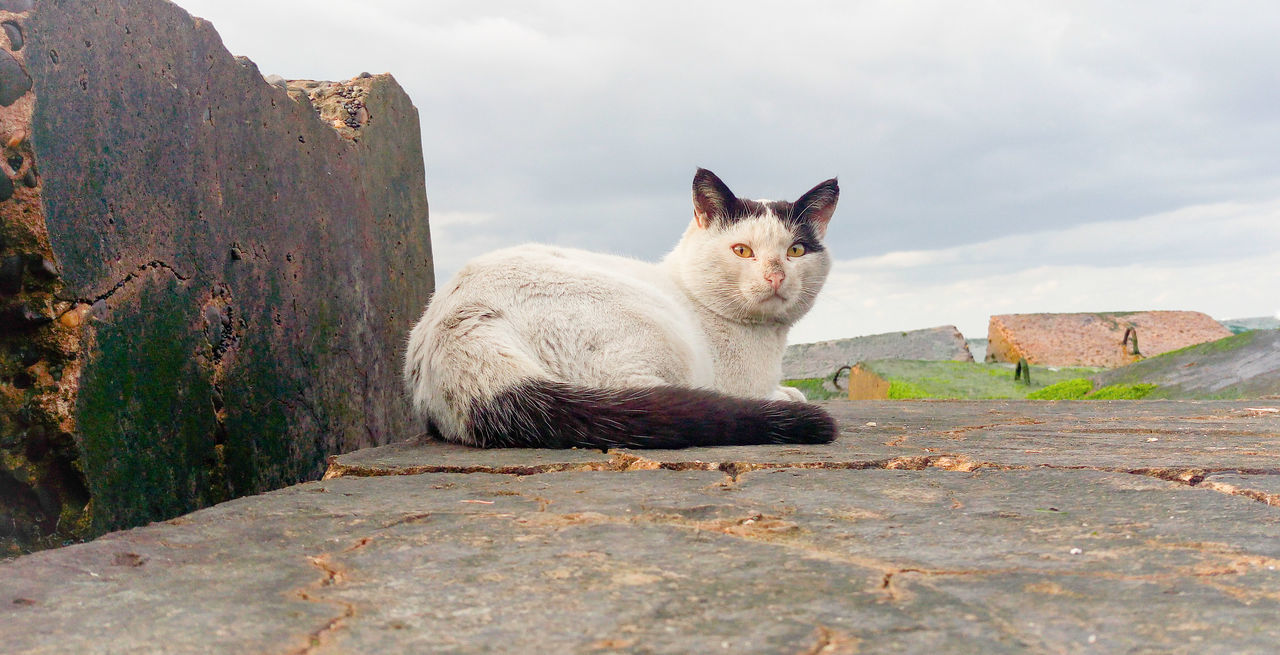 animal themes, one animal, mammal, outdoors, day, domestic animals, no people, domestic cat, looking at camera, feline, sitting, sky, retaining wall, pets, nature, portrait