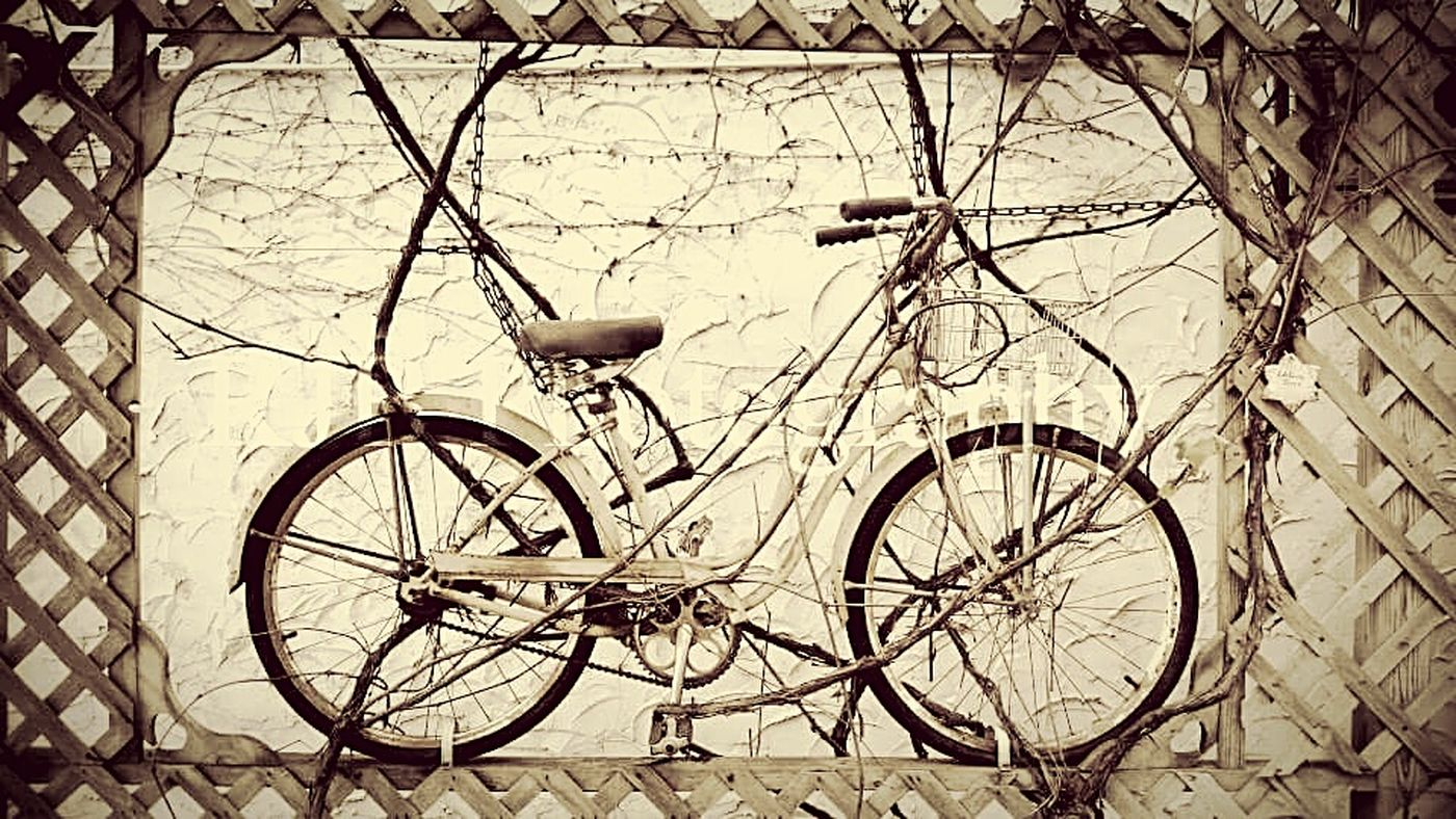 Antiques Bicycles Antique Bike