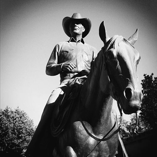 Horse Domestic Animals Low Angle View Cowboy Hat Sky Outdoors Black And White Statue Cowboy Haley Museum Midland, TX