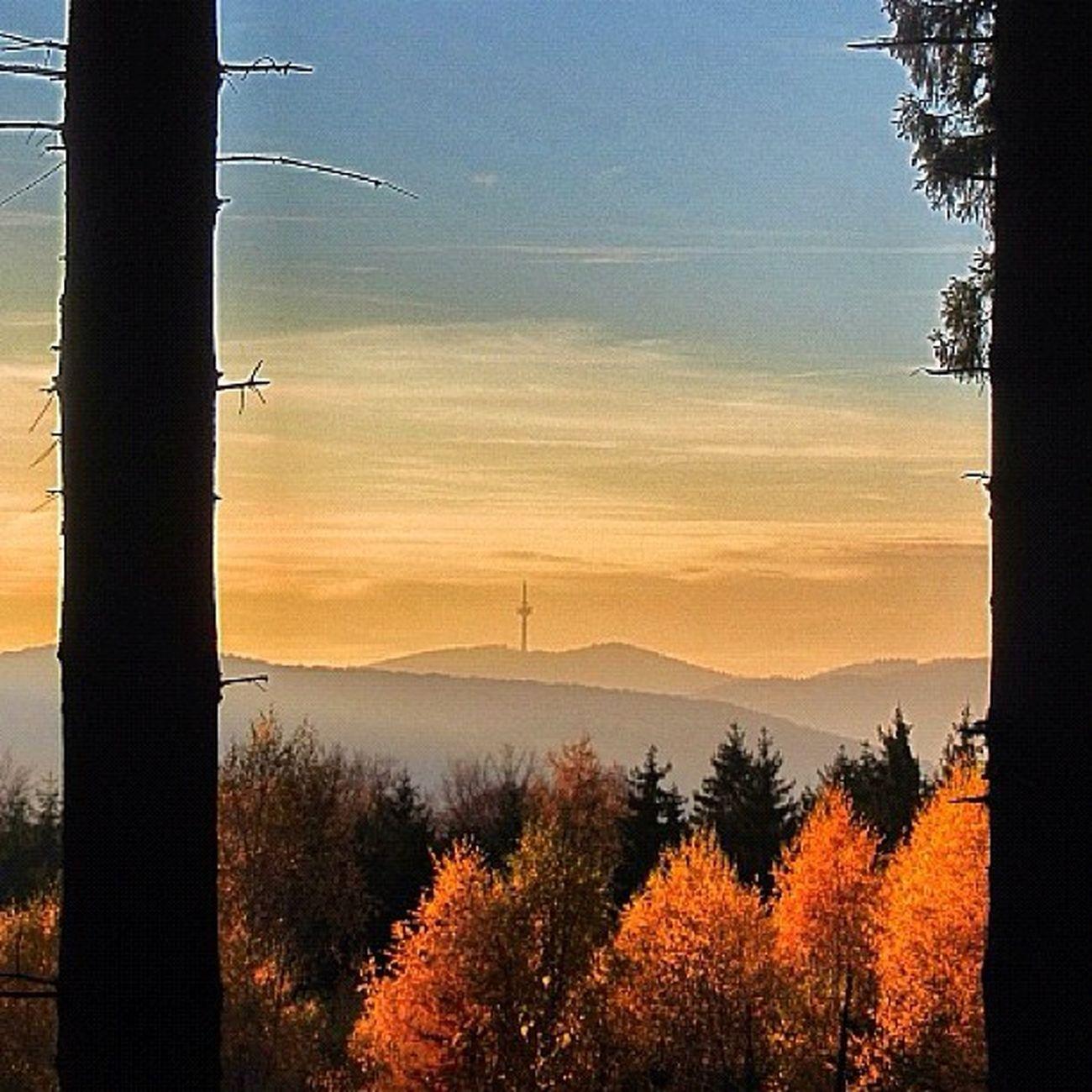 Sklblog Autumn Forest Salzdetfurth