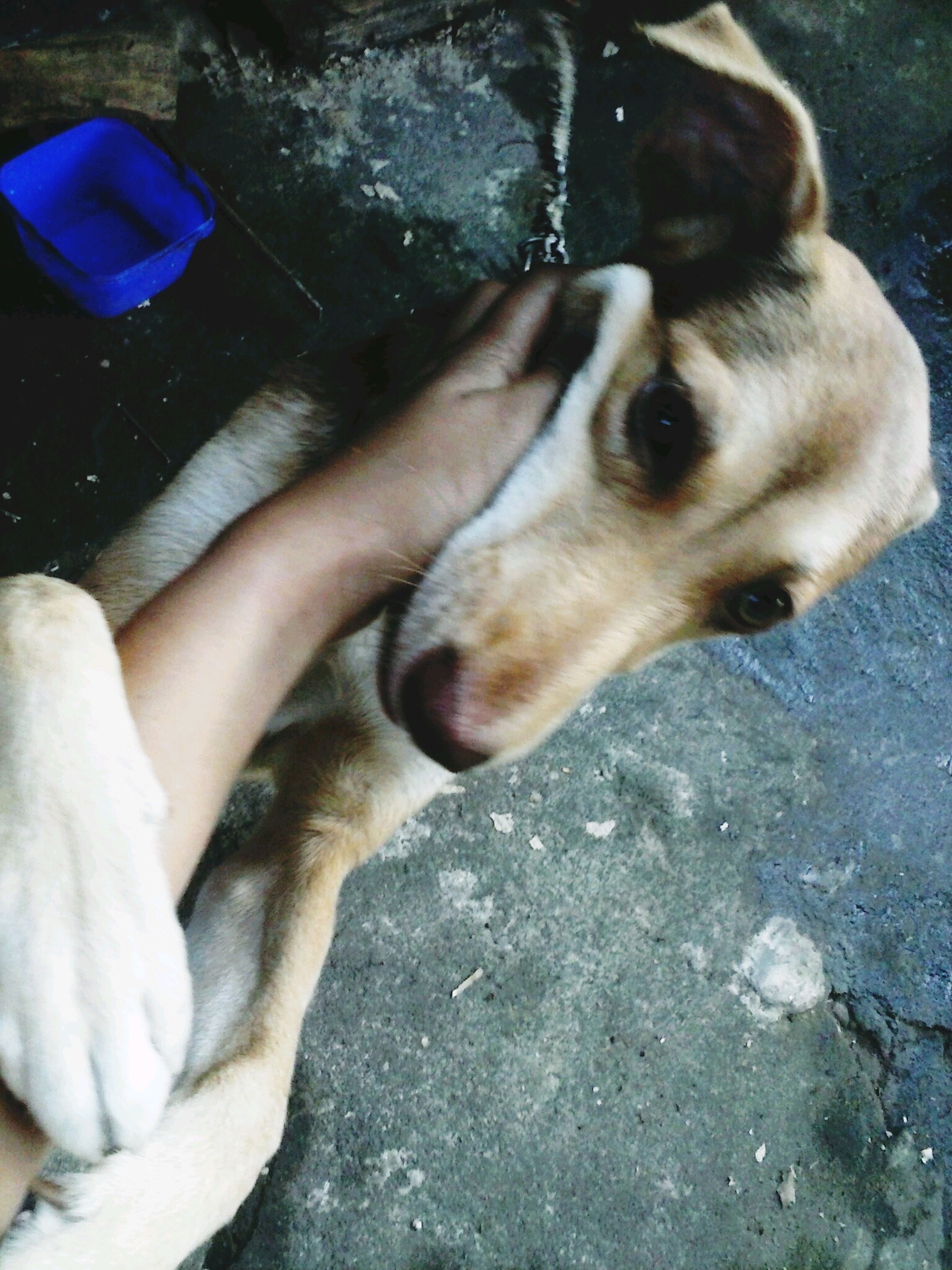 pets, domestic animals, animal themes, one animal, dog, mammal, human body part, one person, lifestyles, close-up, human leg, real people, indoors, human hand, day, low section