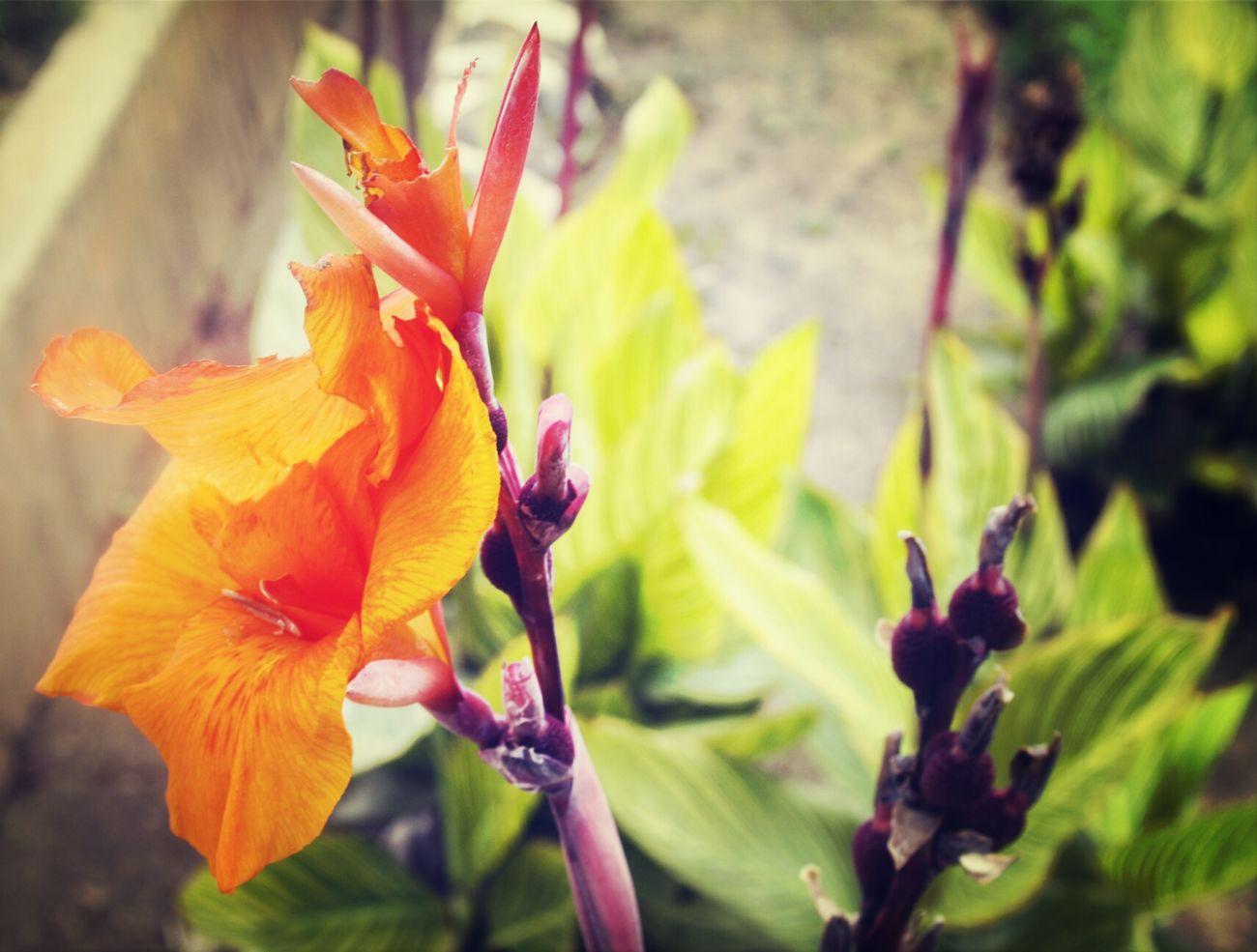 flowerzzizi