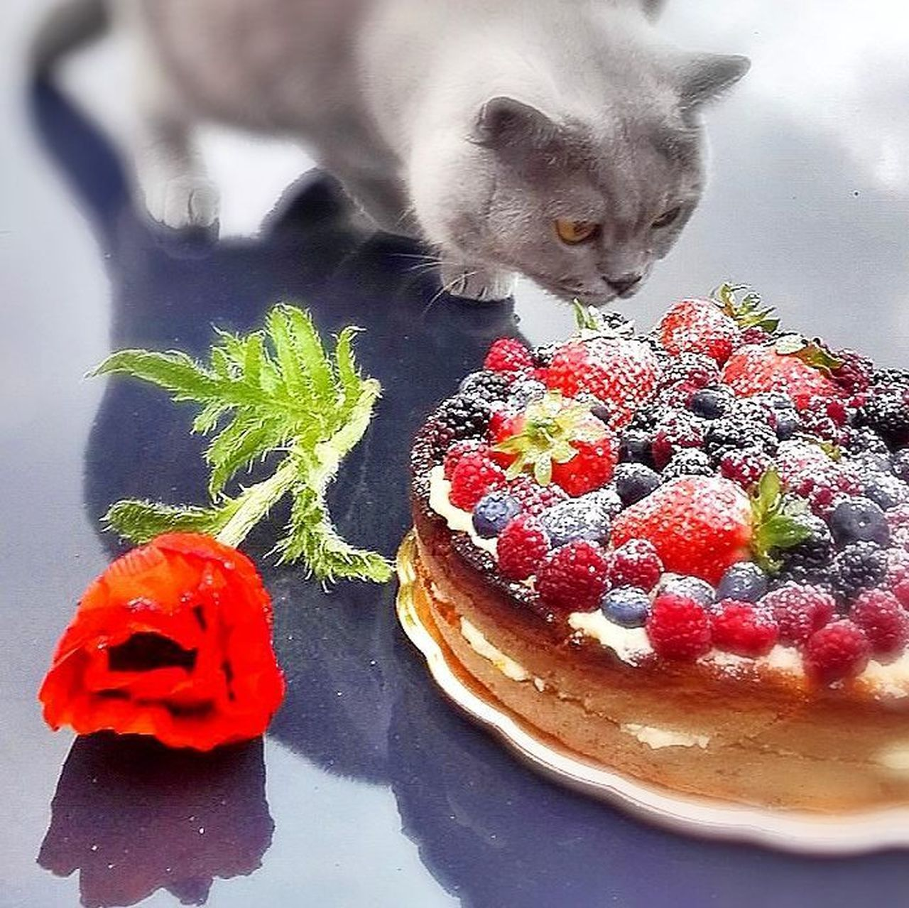 Cake Cake♥ Cat Flower Fruits I´msmart Kocour My Love Myhome Můj Kocourek Nomnom Photo With A Story Photo With Smartphone Terrasse Venoušek