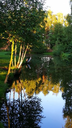 Beautiful Nature in evening sun... Water Tree Nature Reflection Growth Lake Outdoors No People Beauty In Nature Day Plant Sky Reflections In The Water Tranquil Scene Original Picture GetbetterwithAlex Wendland