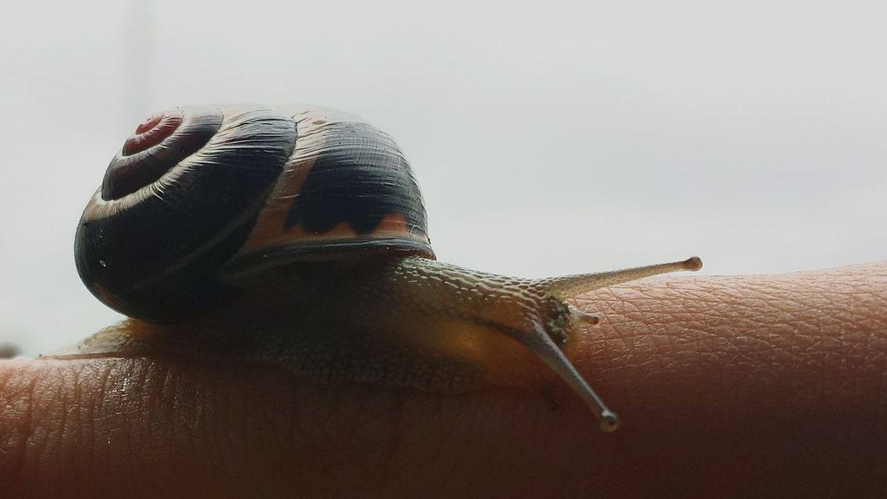 Snail Insects  Nature Belgium Photography Snails Animal Themes Insect Photography Insect Macro  Slug Snail Bugs Nature Creatures