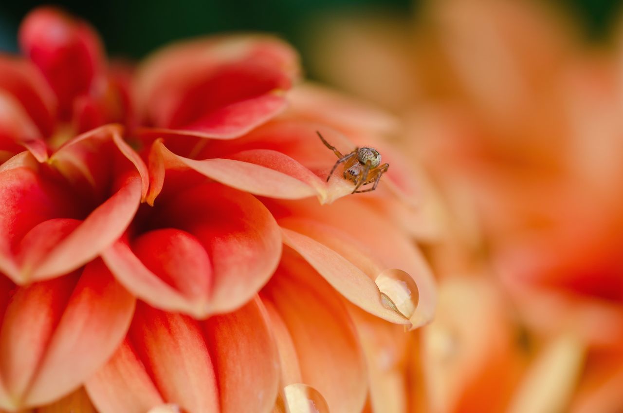 Beautiful stock photos of spider's, Animal Themes, Animals In The Wild, Beauty In Nature, Blooming