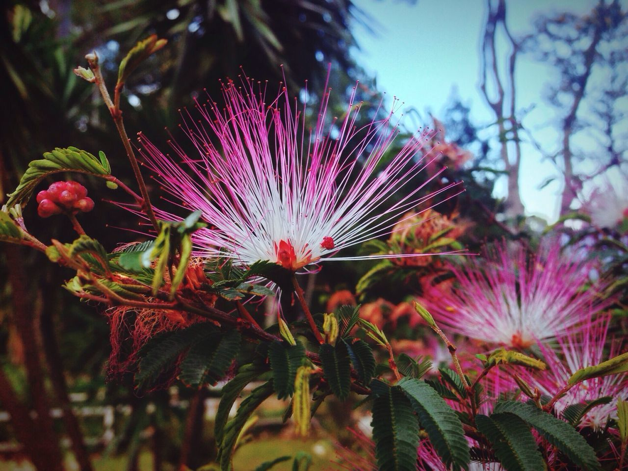 Beautiful stock photos of brazil, Beauty In Nature, Brazil, Close-Up, Day