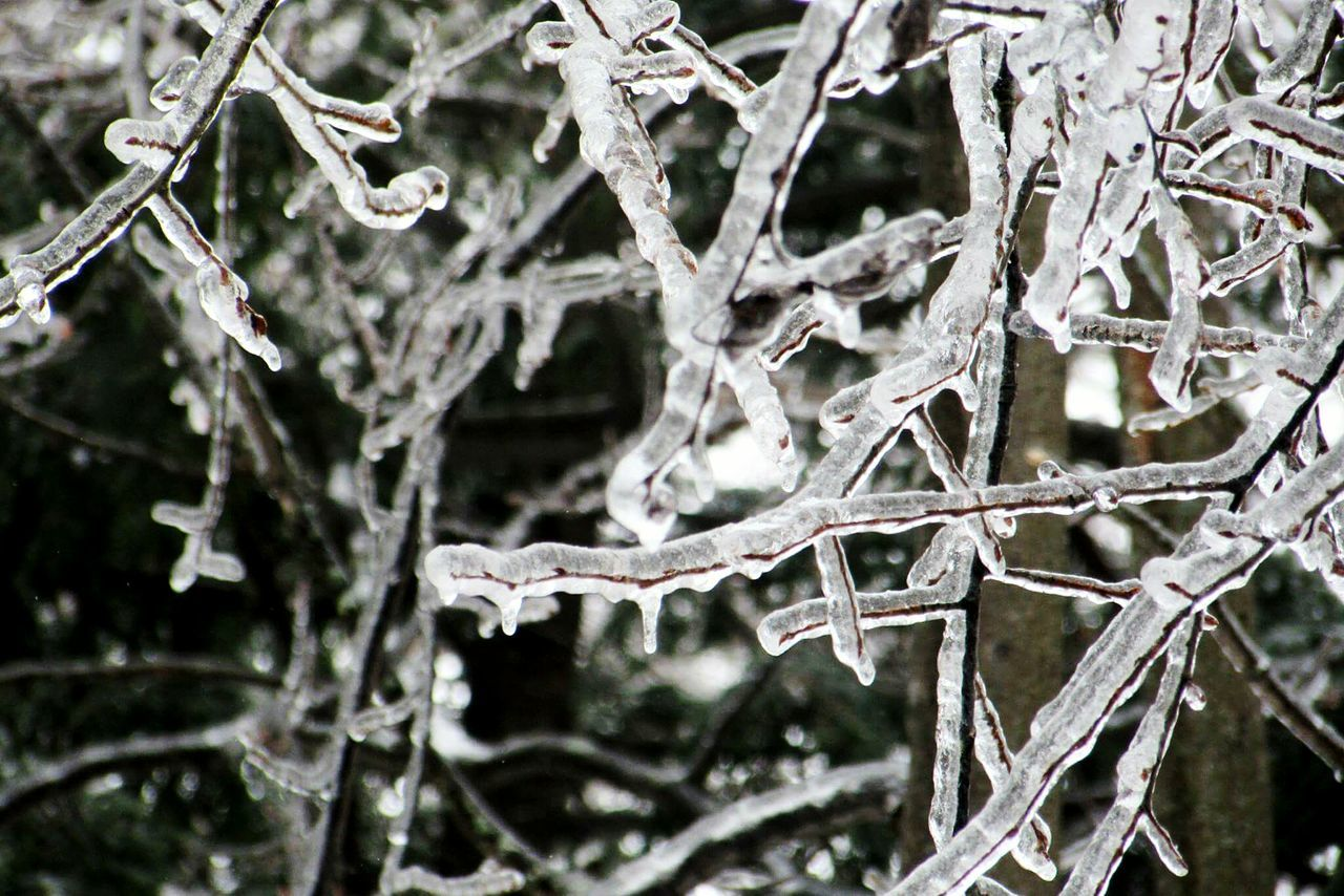 Icestorm Winter Cold Temperature Weather Frozen Tree Nature Beauty In Nature White Color Branch Close-up Twig Outdoors Ice Snowflake Ice Crystal Day Snow Frost