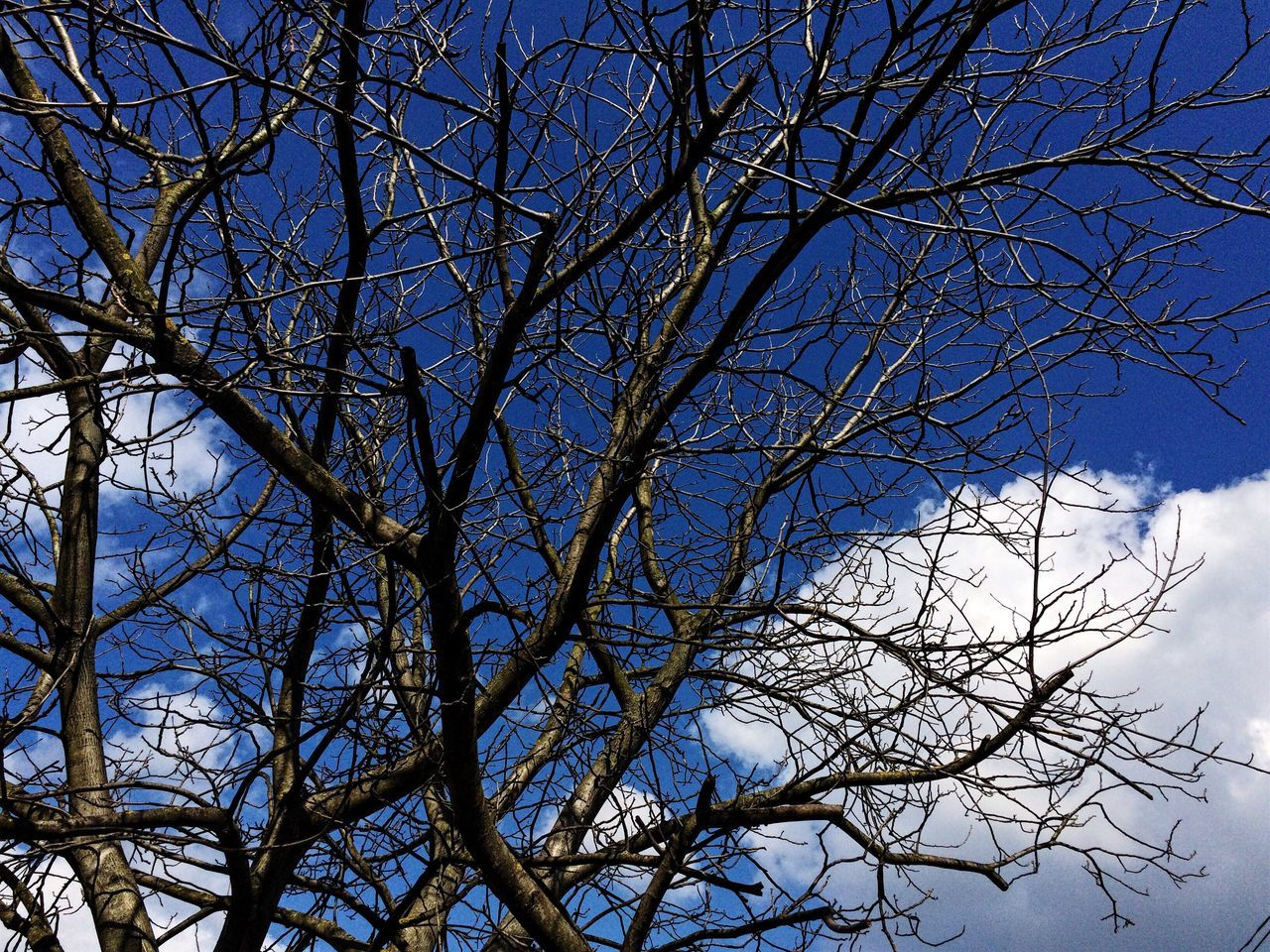 bare tree, tree, branch, nature, sky, beauty in nature, low angle view, blue, no people, tranquility, outdoors, day, growth, scenics