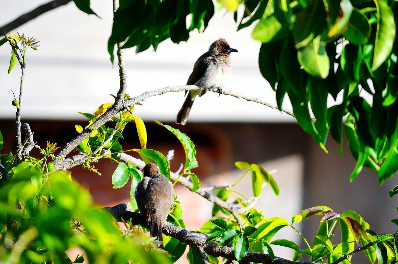 Birds Home Nature Oujda City, Morocco Beautiful Garden Quiet سبحانك ربي