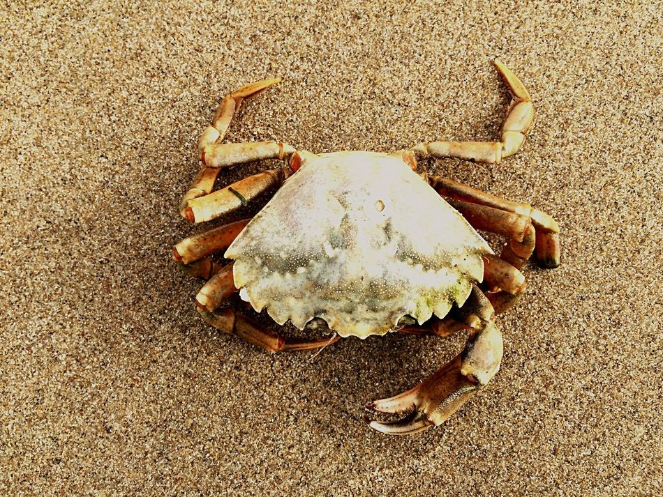Crab Animal beach Beach Beachphotography Sand Color Palette A Bird's Eye View