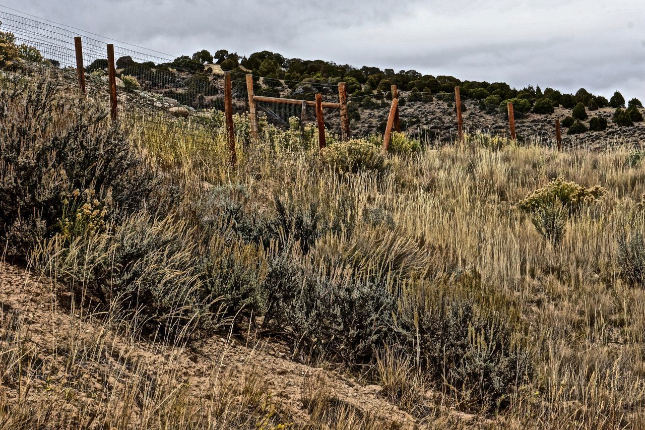 Autumn Beauty In Nature Cloud Cloud - Sky Day Dry Dry Grasses Fence Field Grass Growth Nature Non-urban Scene Outdoors Plant Remote Sagebrush Scenics Sky Southern Exposure Tall Grass The West Tranquil Scene Tranquility Uncultivated