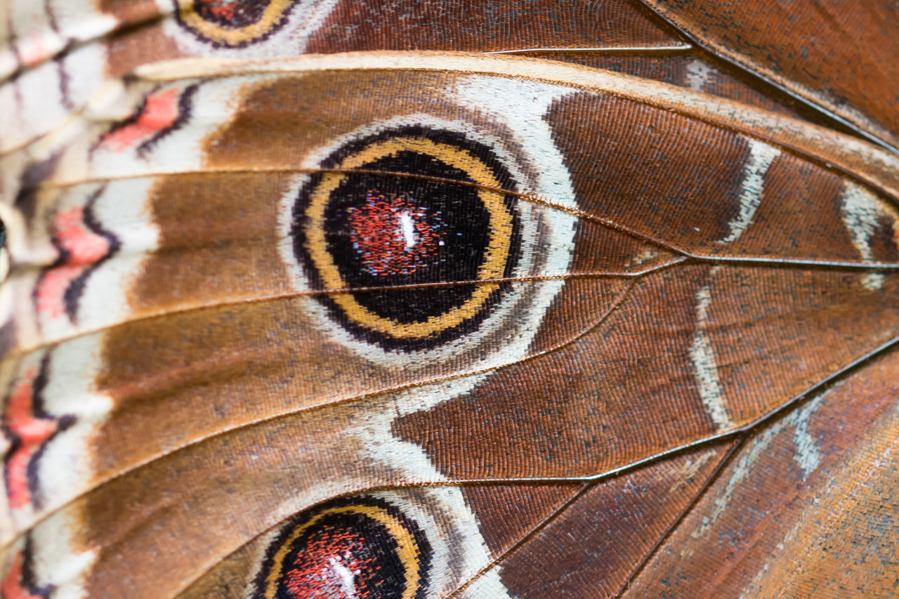 Butterfly wing with awesome detail captured in macro Animal Themes Butterfly Butterfly - Insect Close-up Insect Macro Macro Beauty Macro Photography Macro_collection Nature Nature Photography Nature_collection Naturelovers One Animal