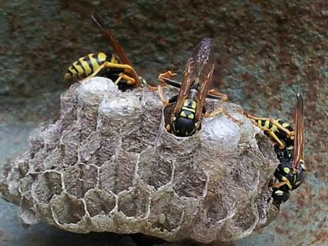 Insects  Nests Up Close & Personal Connected With Nature Busy Living Enjoying Life Taking Chances!!
