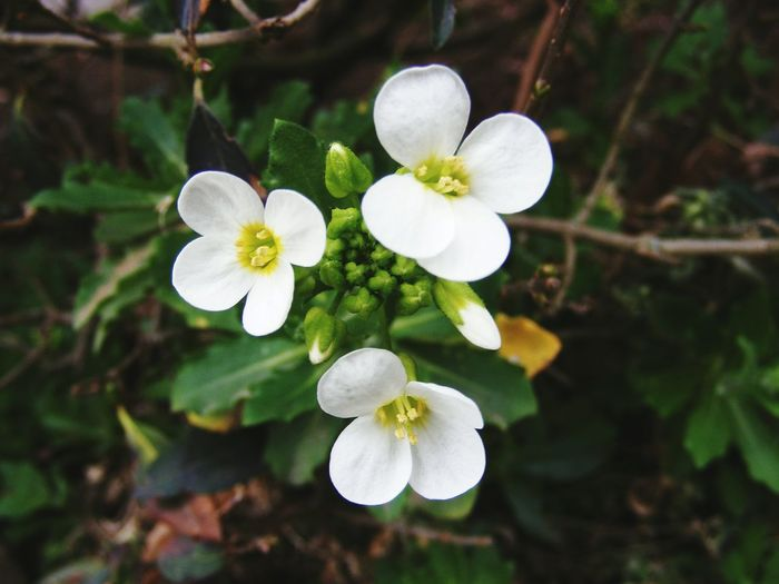 Petite white flowers. Flower Nature Close-up White Color Plant Beauty In Nature Fragility Botany Flower Head Petal Blossom Springtime Freshness Growth No People Day Closing Outdoors Tree Picturesniper907