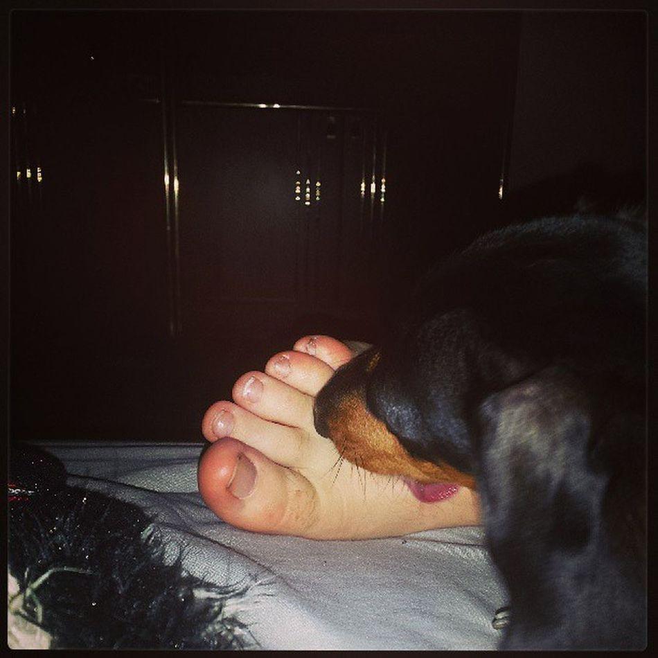 Footfetishdog Weirddogsofinstagram