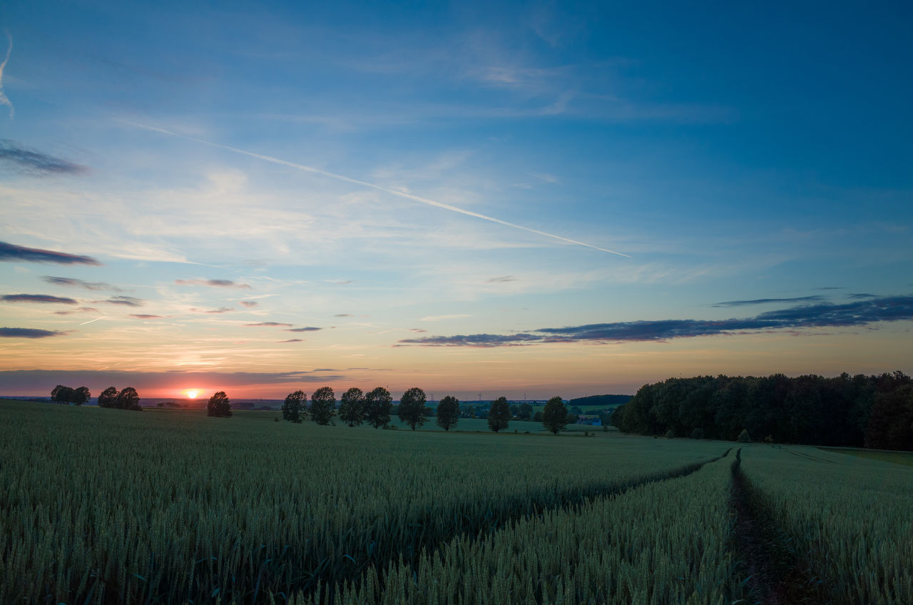 Agriculture Field Landscape Beauty In Nature Sundown Summer Cornfield Lines Ricoh Gr Cultivated Land Sunset Sun Blue Sky Eye4photography  Klaquax@home
