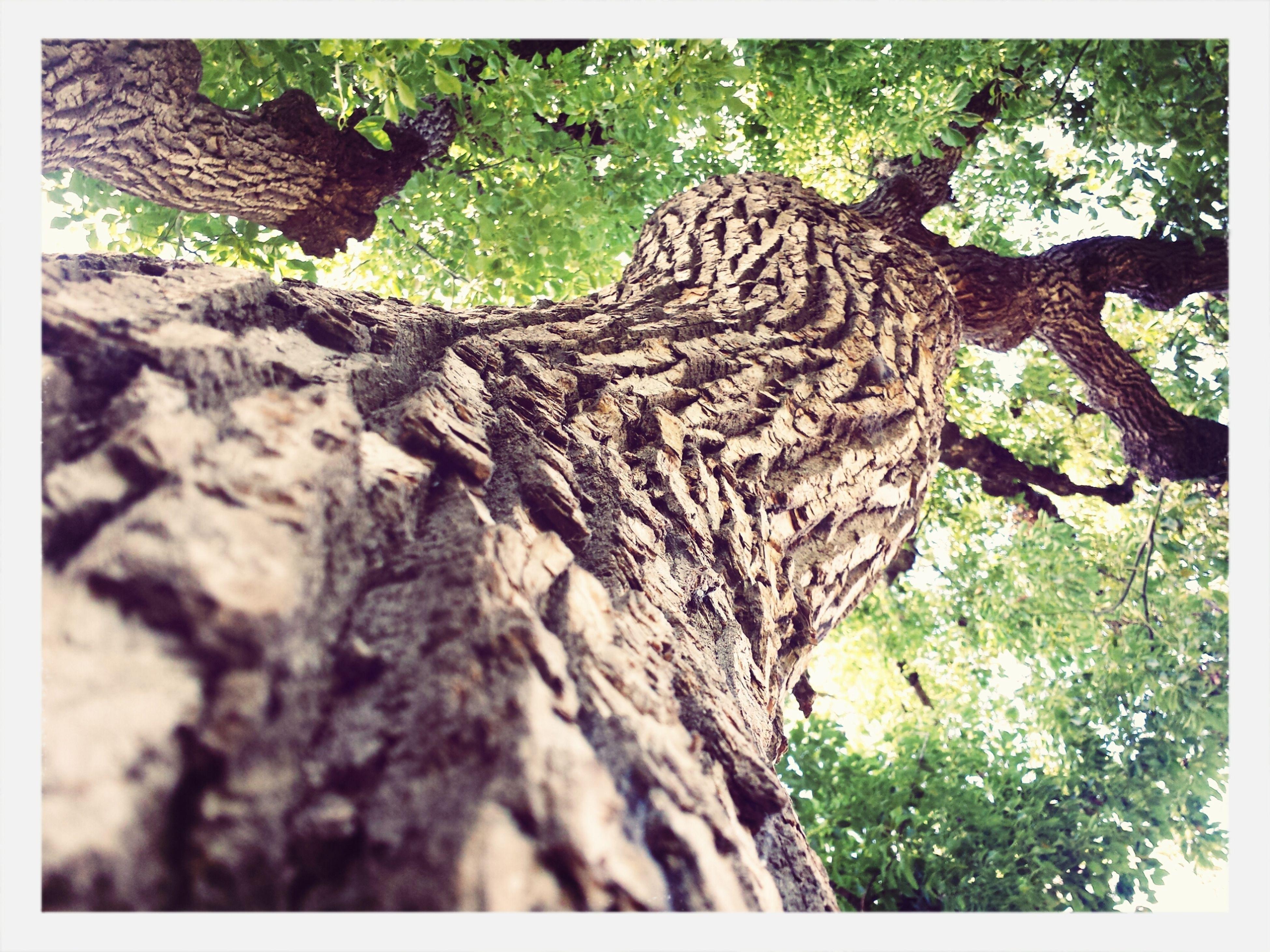 Treescollection California