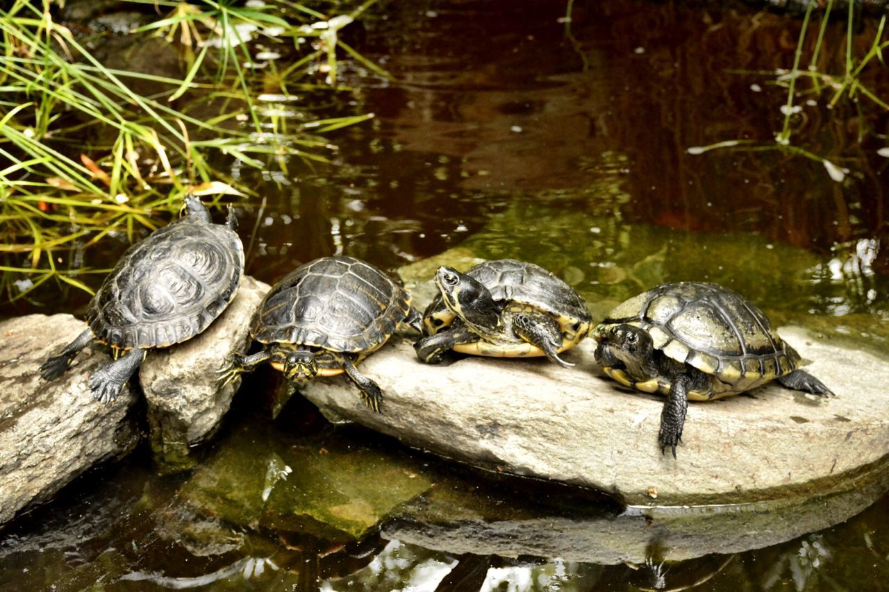 Turtles relaxing Animals Turtle Nature Water