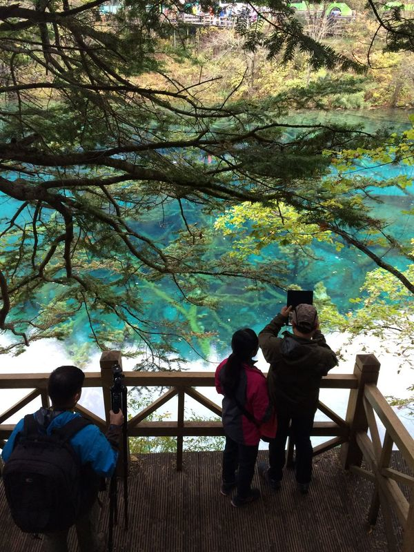 Panda's hometown,it's really a beautiful place!!! Branch Tree Tree Trunk Outdoors Jiuzhaigou Season  Forest Autumn Nature Dead Plant Togetherness Weekend Activities Lifestyles Travertine Sinter Lake People And Nature People Withered Tree Sichuan People Taking Photos The Tourist People Together