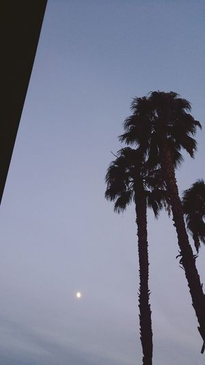 cali in October New Moon It Never Rains