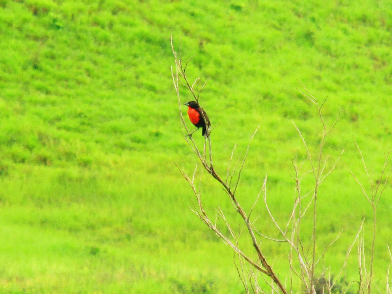 One Animal Animal Themes Animals In The Wild Green Color Nature Grass Outdoors Beauty In Nature Day Bird Photography Birds In The Wild