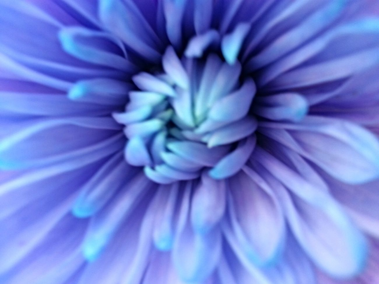 Blue Flower Close Up My Flower Obsession Macro Feeling Blue