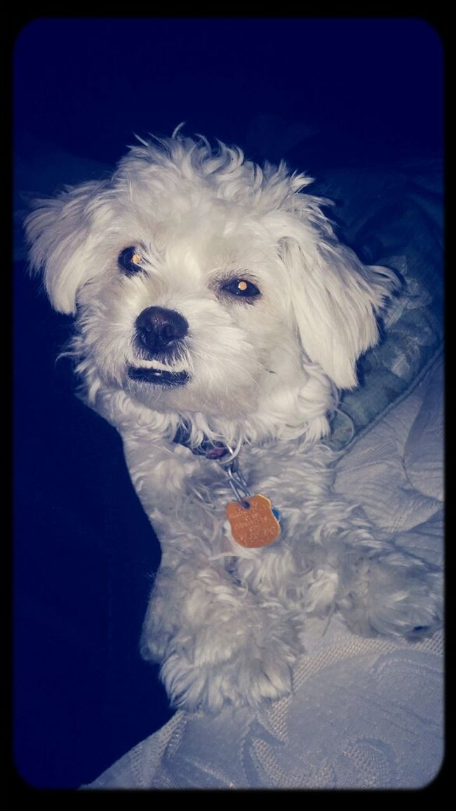 Flash To Bright My Doggy Her Name Duxiee She Amazing