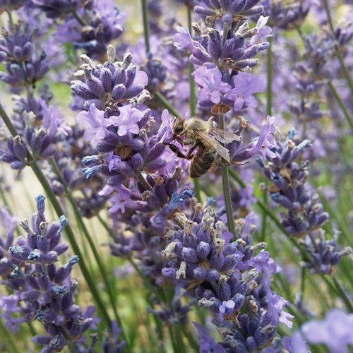 Die Blümchen und die Bienen? :) Nature Honey Bees  Insects  Flowers