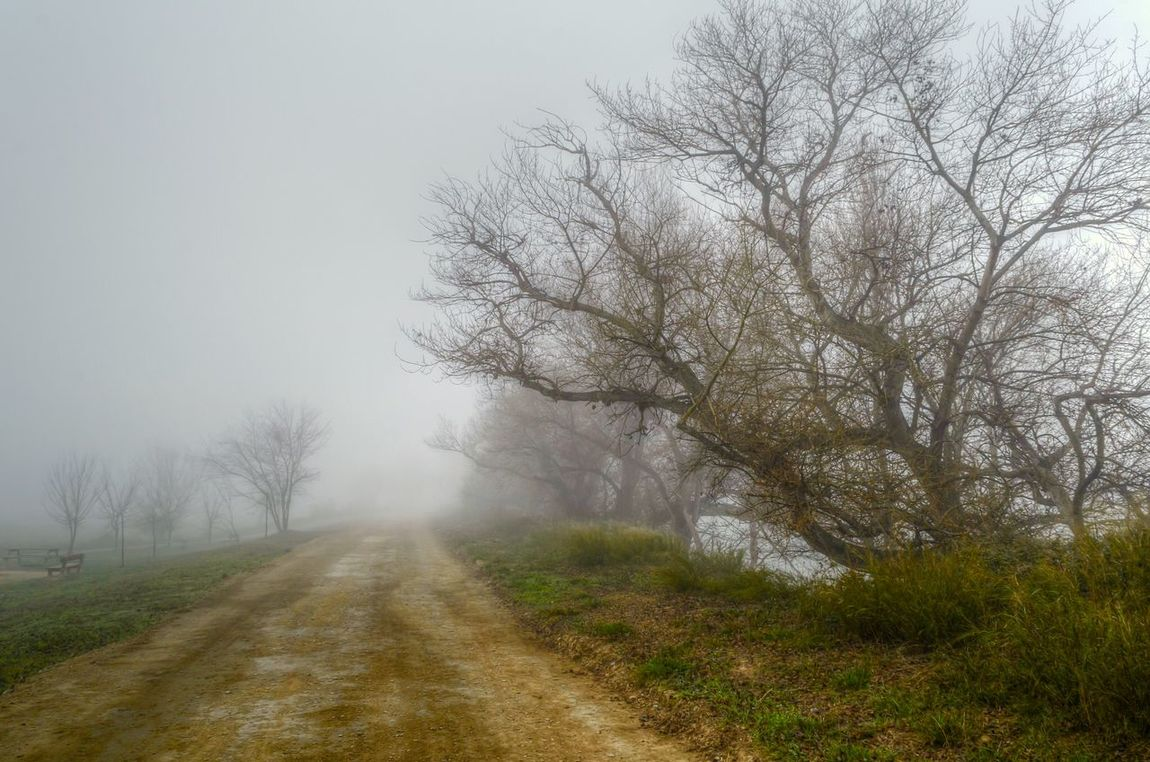 Fog Trees Nature Landscape Photography Picoftheday Taking Photos River