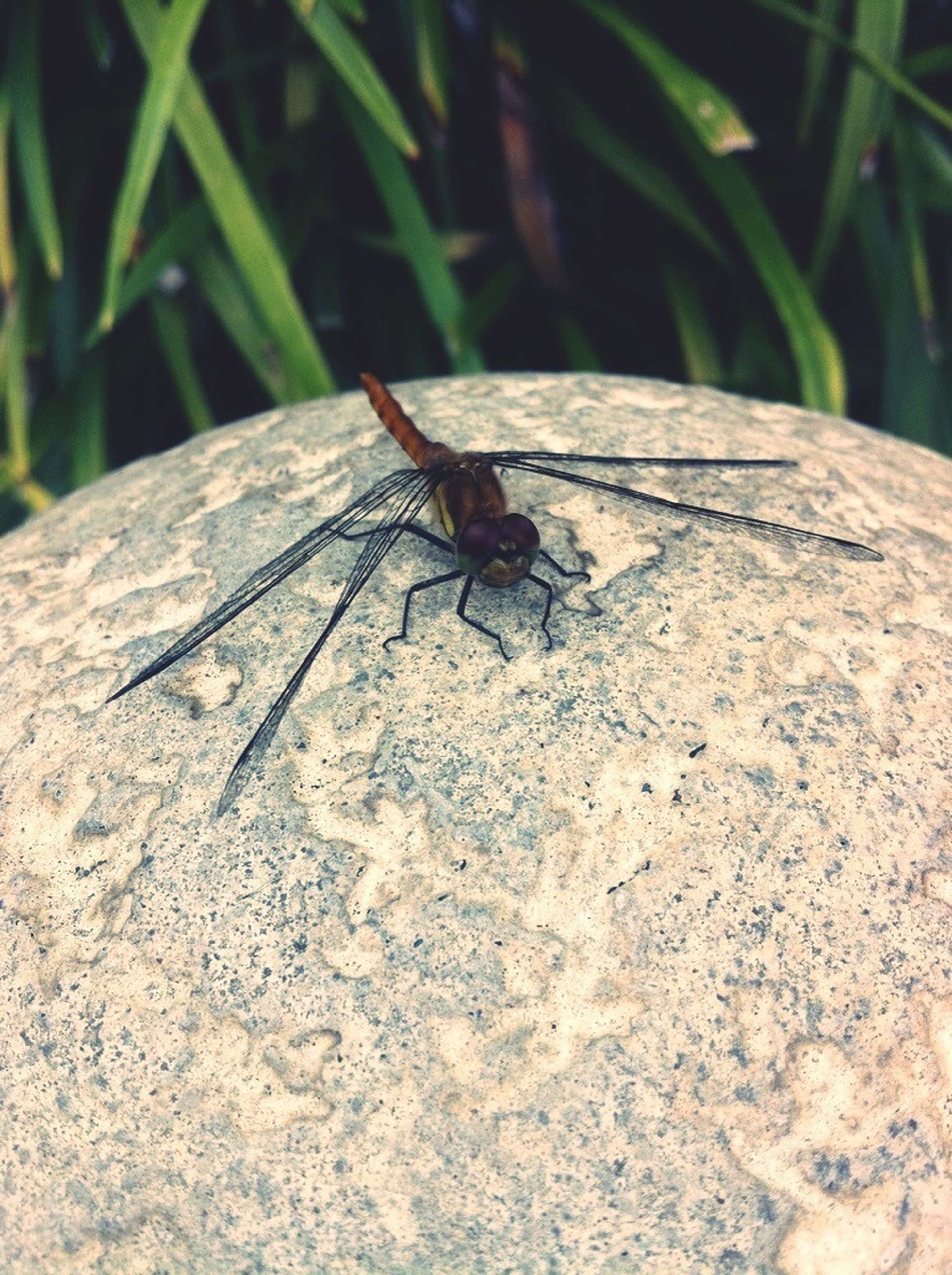 insect, one animal, animals in the wild, animal themes, wildlife, close-up, dragonfly, selective focus, animal antenna, nature, animal wing, focus on foreground, outdoors, day, high angle view, leaf, no people, full length, zoology, invertebrate