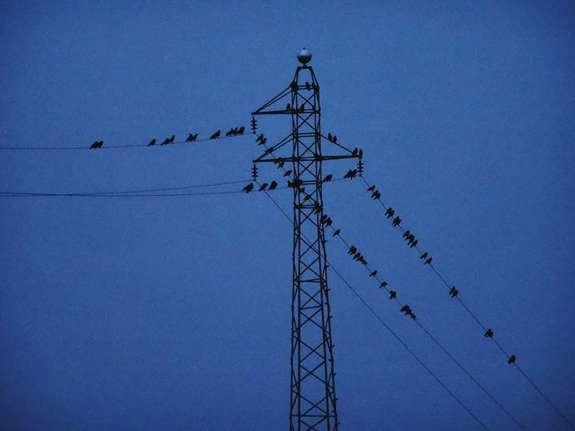 Electricity Pylon Clear Sky Silhouette No People Outdoors Sky Flock Of Birds Large Group Of Animals Day Birds