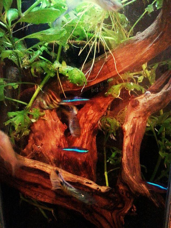Fishtank Bathroom Fish #aquarium #fishtank #tagsforlikes #fishporn #instafish #instagood #swim #swimming #water #coral #reef #reeftank #tropical #tropicalfish #aquaria #photooftheday #saltwater #freshwater #beautiful #ocean #watertank