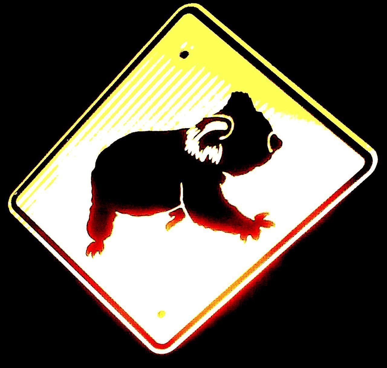 Koala Illuminated Signs Signage Signs Fauna Koala 🐨 Koalas KO_A_LA Ko A La Warning Sign Road Sign Animals Koala Bear Koalabear Caution Sign Roadsign Sign Signs_collection Signporn Signstalkers Sign Hunters SignHunters Signhunter SIGN. Signs & More Signs