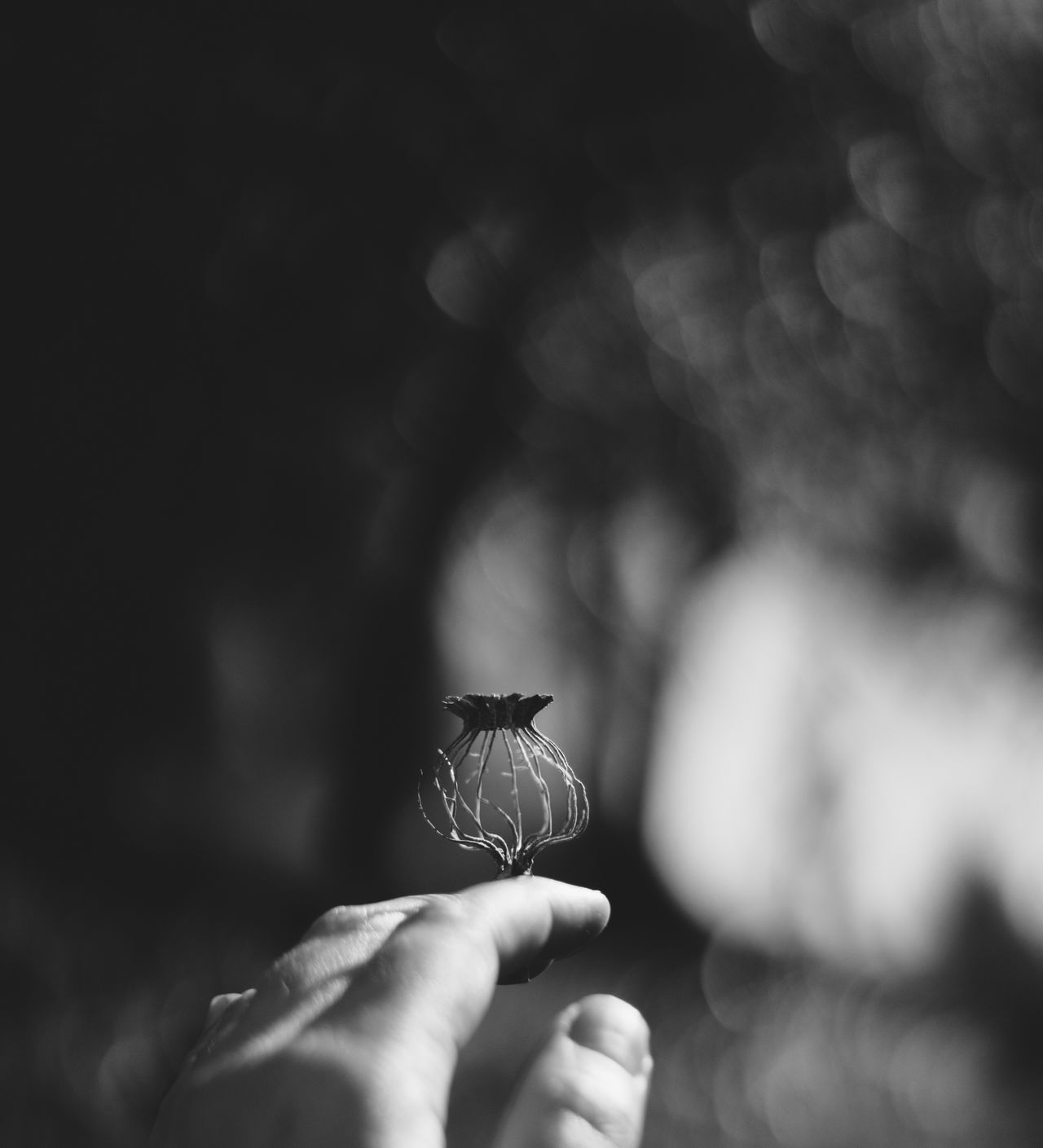 Human Hand One Animal Animal Themes Human Body Part Animals In The Wild Light And Shadow Black & White Seedpod Decay Poppy Pod One Person Real People Human Finger Unrecognizable Person Close-up Holding Focus On Foreground Animal Wildlife Day Outdoors Mosquito Nature
