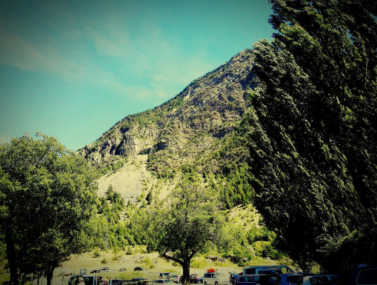 tree, mountain, nature, day, outdoors, beauty in nature, no people, clear sky, growth, scenics, sky