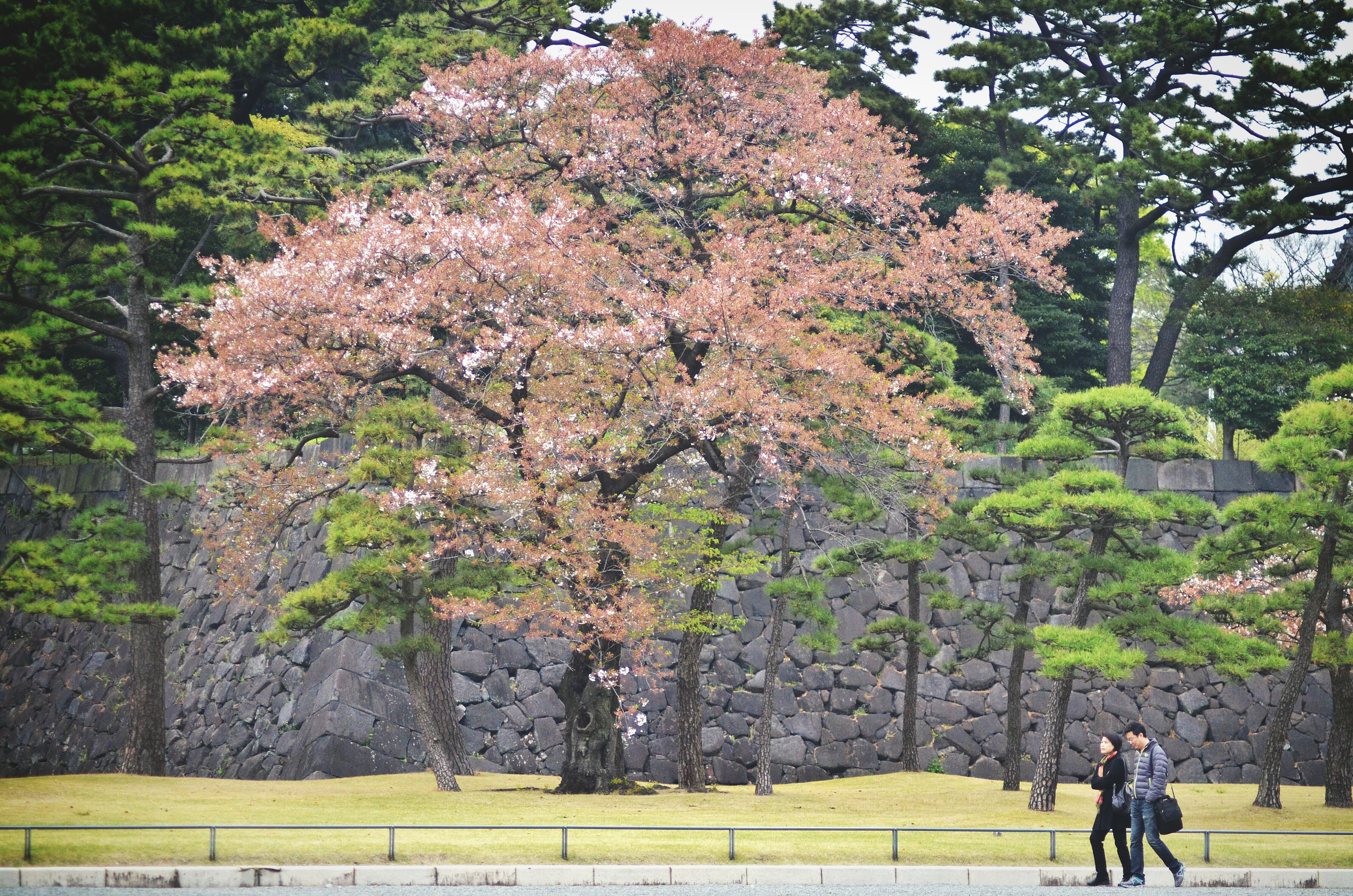 tree, lifestyles, leisure activity, men, growth, person, nature, walking, beauty in nature, branch, flower, full length, rear view, tranquility, park - man made space, tourist, tranquil scene