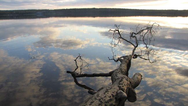 Landscape Sunset Clouds Horizon Branches Reflection Ландшафт закат🌇 облака горизонт