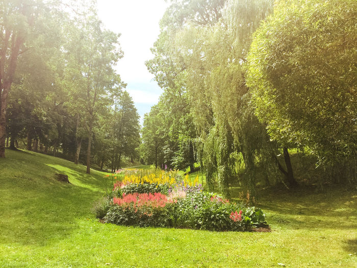 Pils Parks, Kuldiga. Latvia Beauty In Nature Change Day Forest Grass Green Green Color Growth Kuldiga Latvia Lush Foliage Nature Outdoors Park Plant Summer Summertime Tree