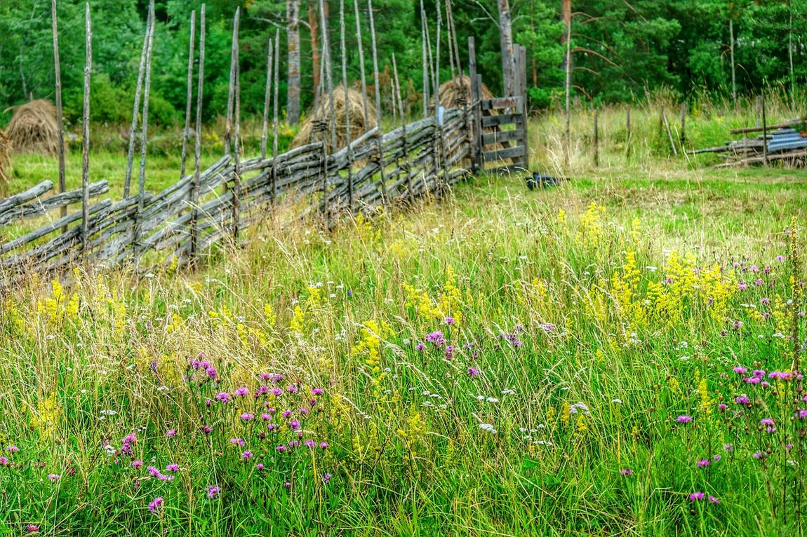 Countryside Glamour Landscape_Collection Fields Countryside Country Views Paimio Finland Country Fields Nature Color Of Life Summer2016 Nature Beauty Colourful Colours Of Nature