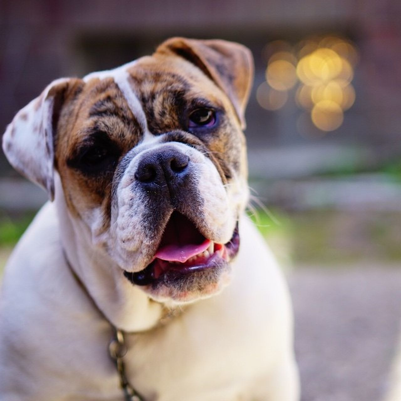 dog, pets, one animal, domestic animals, mammal, animal themes, outdoors, focus on foreground, no people, portrait, close-up, day, looking at camera, nature