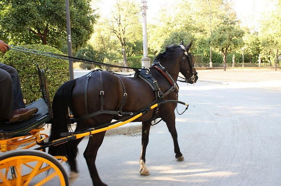 Horse Horse Riding Caballo Cavalo Coche Sevilleriding At The Park Riding Horses Riding Horse Sevillacaballo