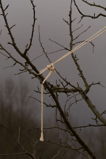 Walking below a dramatic sky Bound Twigs Day Grey Sky Landscape No People Outdoors Rope Twig Winter